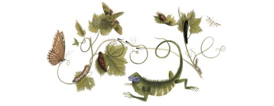 Google Doodle: Maria Sibylla Merian